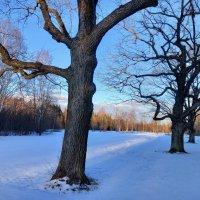 Весна в Баболовском парке :: Сапсан
