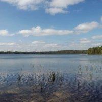 Лесные озера :: Liliya Kharlamova