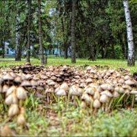 В лесу призаводском... :: Сергей Порфирьев