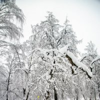 Снегопад :: Анатолий Цыганок