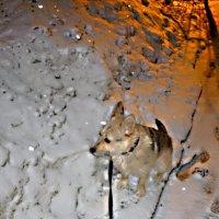 Под весенним снегом :: Mary Коллар