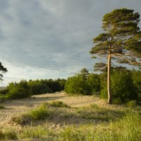 Северодвинск, Ягры, Белое море, летний вечерок :: Владимир Шибинский