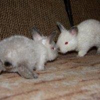 Братцы-кролики :: Нэля Лысенко