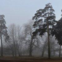 Утром туманным..... :: Юрий Цыплятников