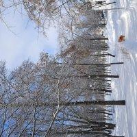 Такой была зима... :: Irene Irene
