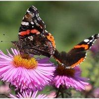 Бабочки :: ZNatasha -