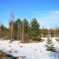 в лесу еще снег лежит :: НАТАЛЬЯ