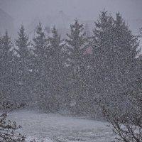 Зима вернулась. Сплошная стена снега ... :: Владимир Икомацких