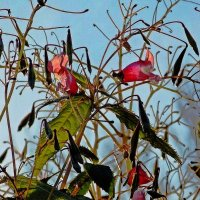 Цветы в начале осени :: Фотогруппа Весна-Вера,Саша,Натан