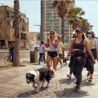 На набережной Тель-Авива :: Lmark