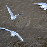 Мир птиц :: Татьяна Н.