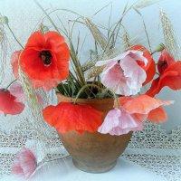 Нежнее шелка маков цвет... :: TAMARA КАДАНОВА