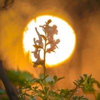 Весеннее солнце :: Фёдор. Лашков