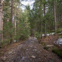 в лесу :: vladimir