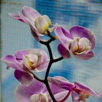 Арт от прекрасной орхидеи... :: Тамара Бедай