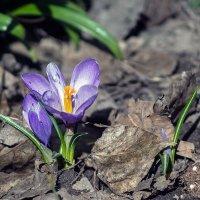 Весна началась :: VL
