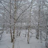 В нашем городе снег... :: Anna Ivanova