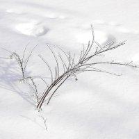 Зима :: Irene Irene