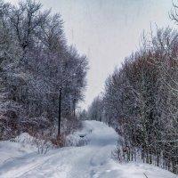 Снегопад :: Василий Цымбал