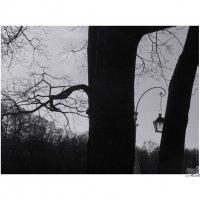 дерево с фонарём :: sv.kaschuk