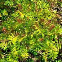 Весенний ковер молодых листьев :: Елена Семигина