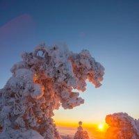 Зимнее утро :: Сергей Титов