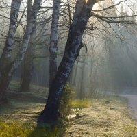 В утреннем свете...... :: Юрий Цыплятников