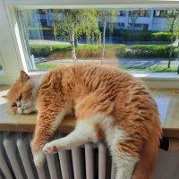 Скучно...а за окном весна! :: Galina Dzubina