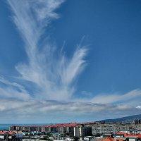 Уши растут из облаков :: Валерий Дворников
