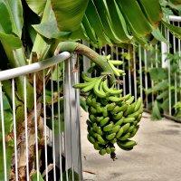 бананы) налетай! :: Осень