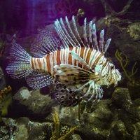 Рыбка. :: Сергей Вилков