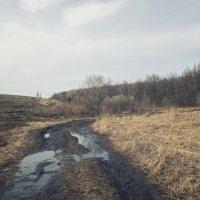 Весенняя природа :: Юлия Авдеева