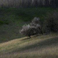 весенняя долина .. :: Лиана Краснопольская .