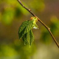свежие краски весны :: Петр Беляков