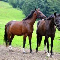 Эх,вы кони удалые... :: tamara *****