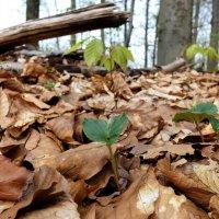 в лесу ... :: Heinz Thorns