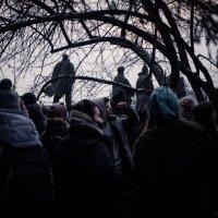 На митинге :: Елена Берсенёва