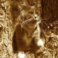 Идет охота на волков... :: Татьяна