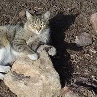 Кошечка на прогулке . :: Pavlov Filipp