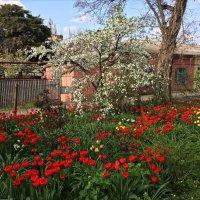 Цветущий май :: Надежда