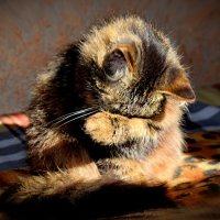"""Кошкины слёзы"" :: A. SMIRNOV"