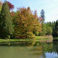 В старом замковом парке :: tamara *****