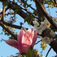 Пора всеобщего цветения. ВЕСНА рисует картины... :: Тамара Бедай