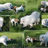 Большая палочка для маленькой собачки? ) :: Тамара Бедай