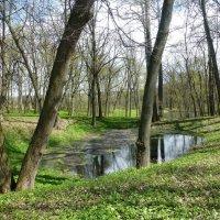 Май в Ясной Поляне :: Лидия Бусурина