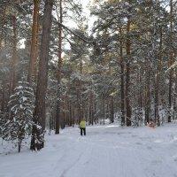Хорошо скрипит снег...лесной туристский кросс. :: Андрей Хлопонин