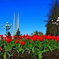 Тюльпаны к Празднику! :: Vladimir Semenchukov