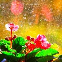 Утро пропитанное светом и цветом 10 мая 6 утра :: олег свирский
