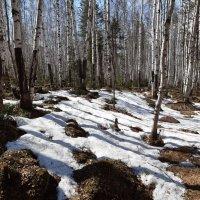 В весеннем лесу :: Галина