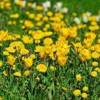 Всмотритесь в эту красоту - они нам принесли Весну! :: Тамара Бедай